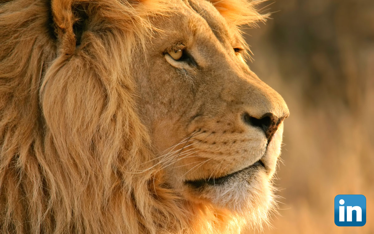 LION stands for LinkedIn Open Networker - Stamerra.it
